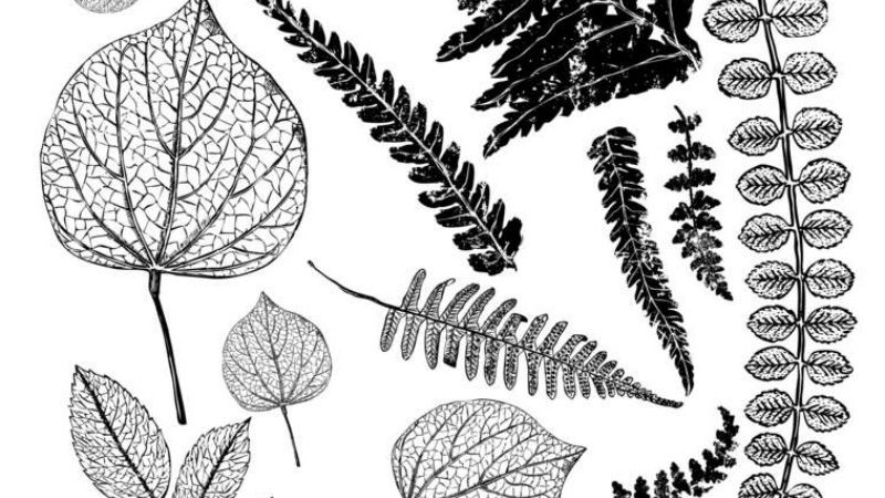 IOD Iron Orchid Designs Stamp Fronds