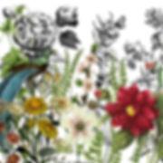 IOD Transfer Midnight Garden