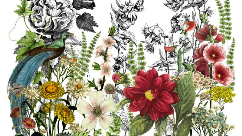 IOD Iron Orchid Designs Transfer Midnight Garden