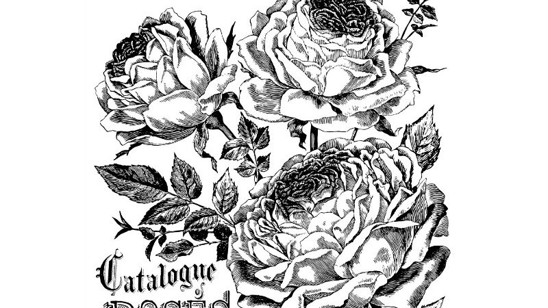 IOD Iron Orchid Designs Transfer Catalogue of Roses