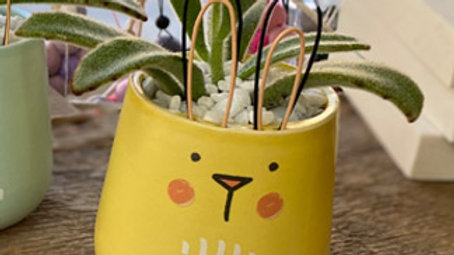 Yellow  Bunny with Succulent