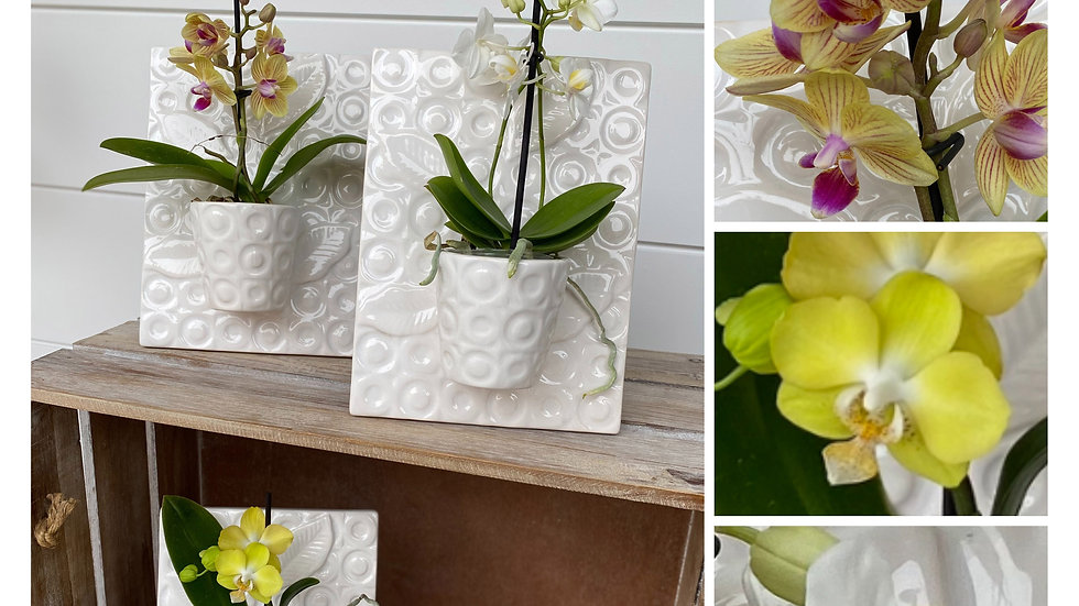 Ceramic Frame with Mini Live Orchid