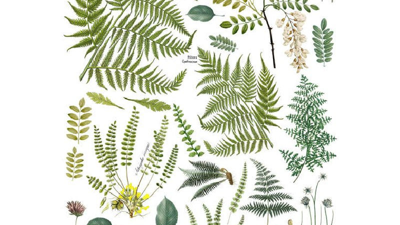 IOD Iron Orchid Designs Transfer Frond Botanical
