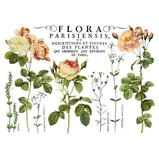 IOD Iron Orchid Designs Transfer Flora Parisiensis