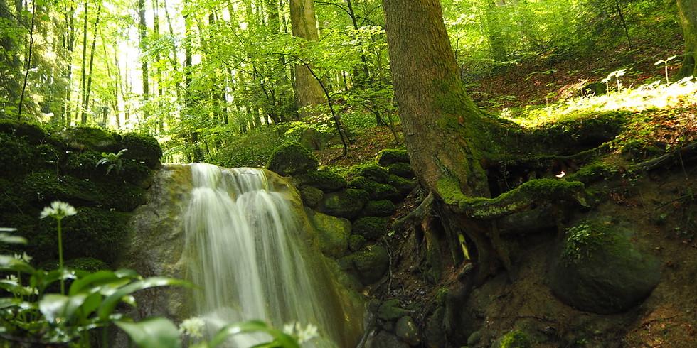 Der Wald und seine Bewohner
