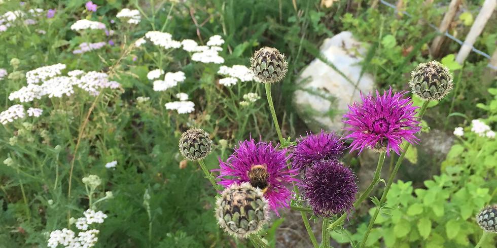 Wildblumen-/stauden-Verkauf