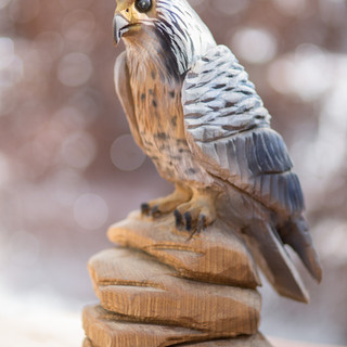 Peregrine Falcons are great hunters.