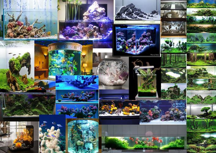 aquarioms.jpg