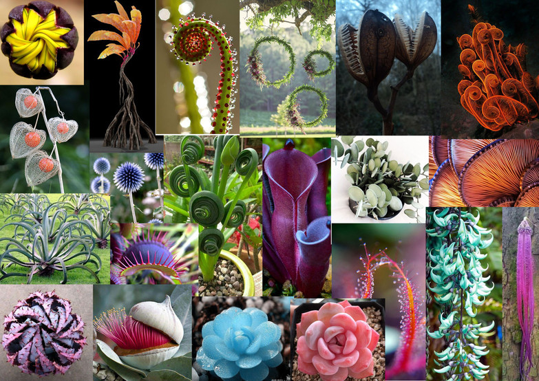 plant-moodboard.jpg