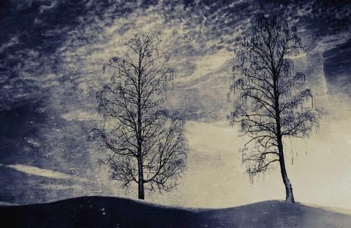 To trær