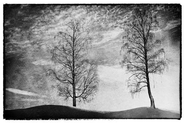 To trær SH