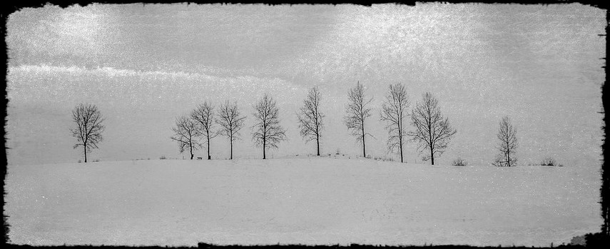 10 Trær
