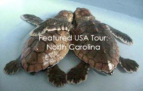 NC Turtles with text