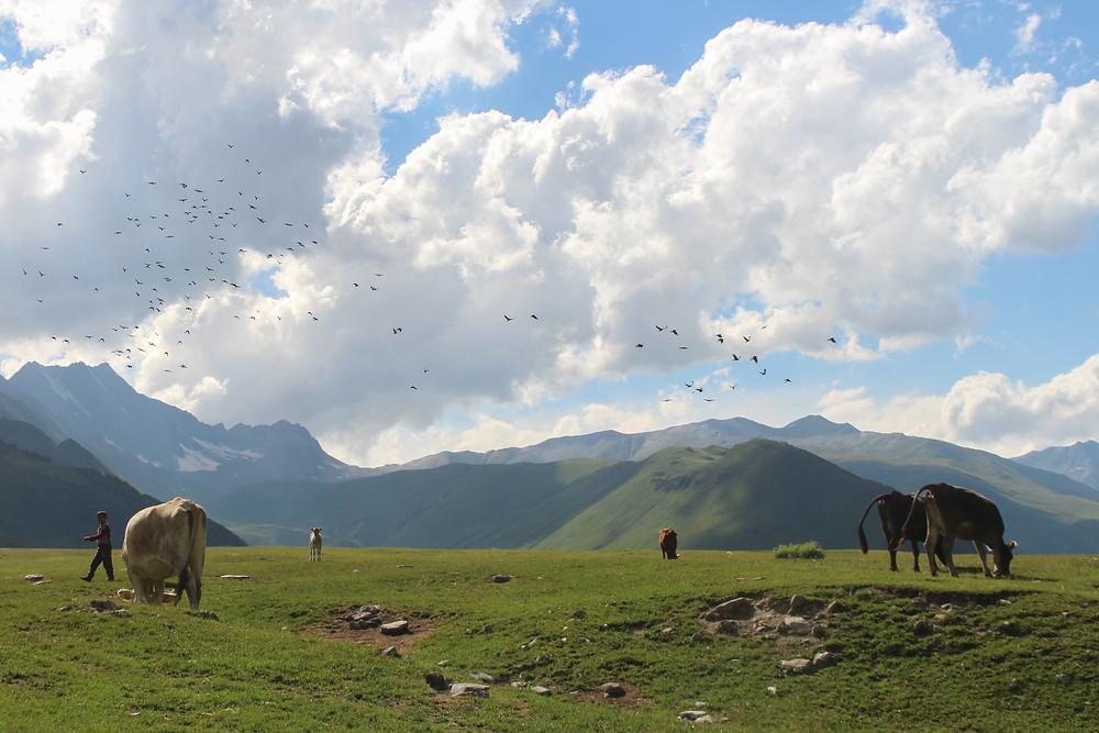 עמק טרוסו, קזבגי, גאורגיה