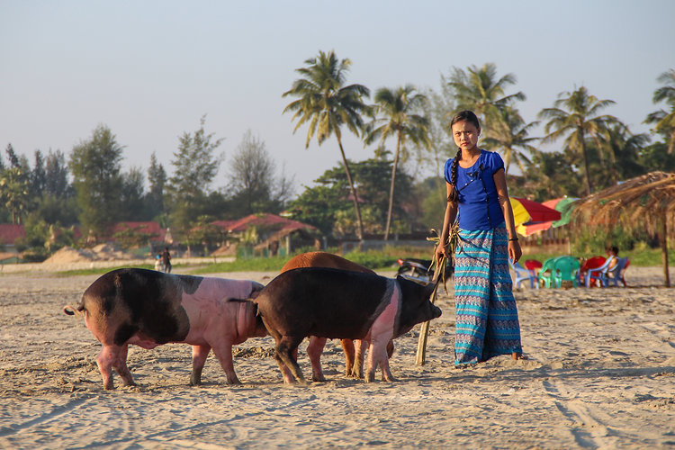 a girl with pigs in Ngwe Saung beach