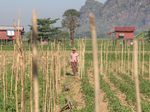 A farmer in Hpa An's rural area