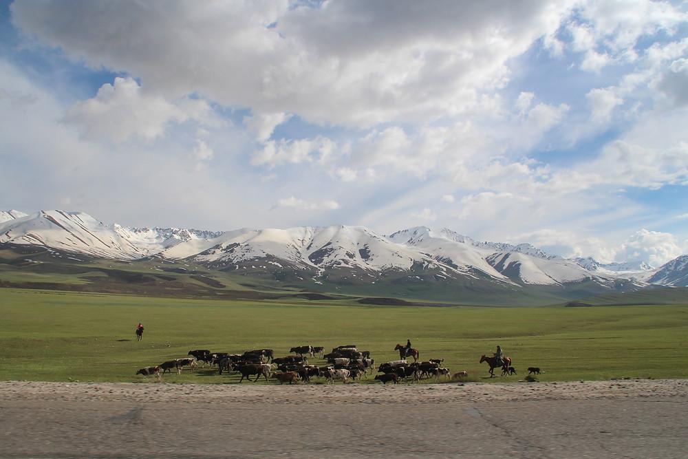 רועי צאן על סוסים וברקע גבעות ירוקות ופסגות מושלגות