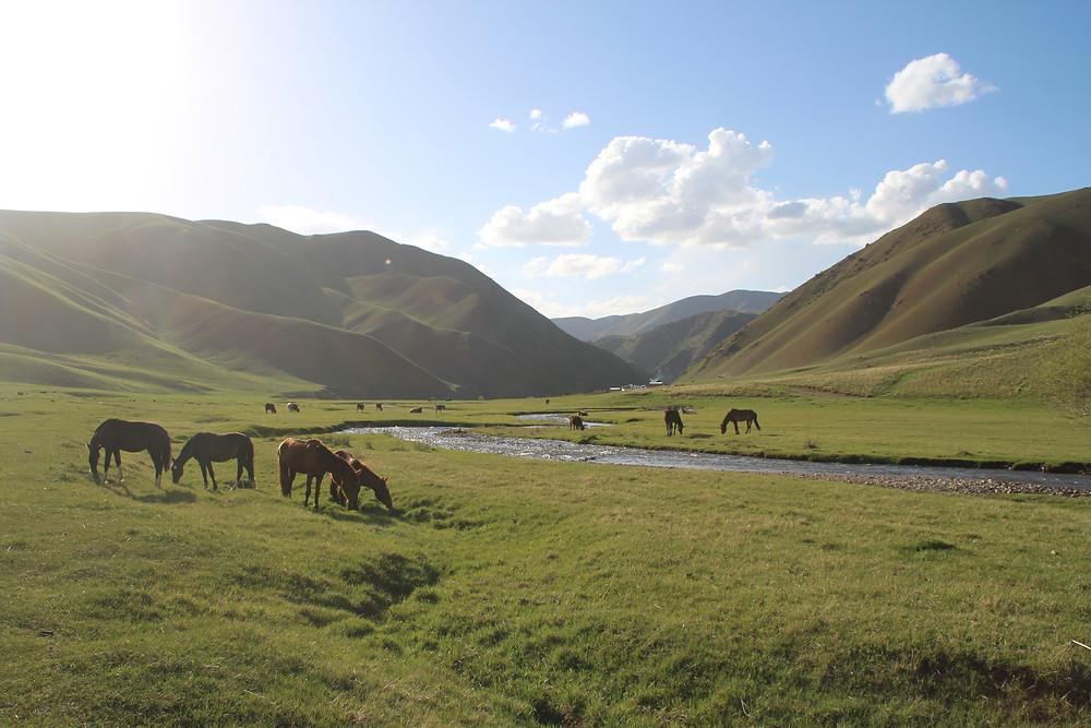 סוסים שותים מנהר על רקע גבעות ירוקות, בדרך לסונג קול