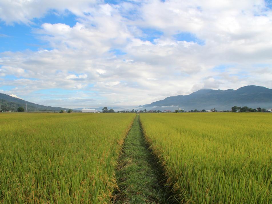 East rift valley, Taiwan