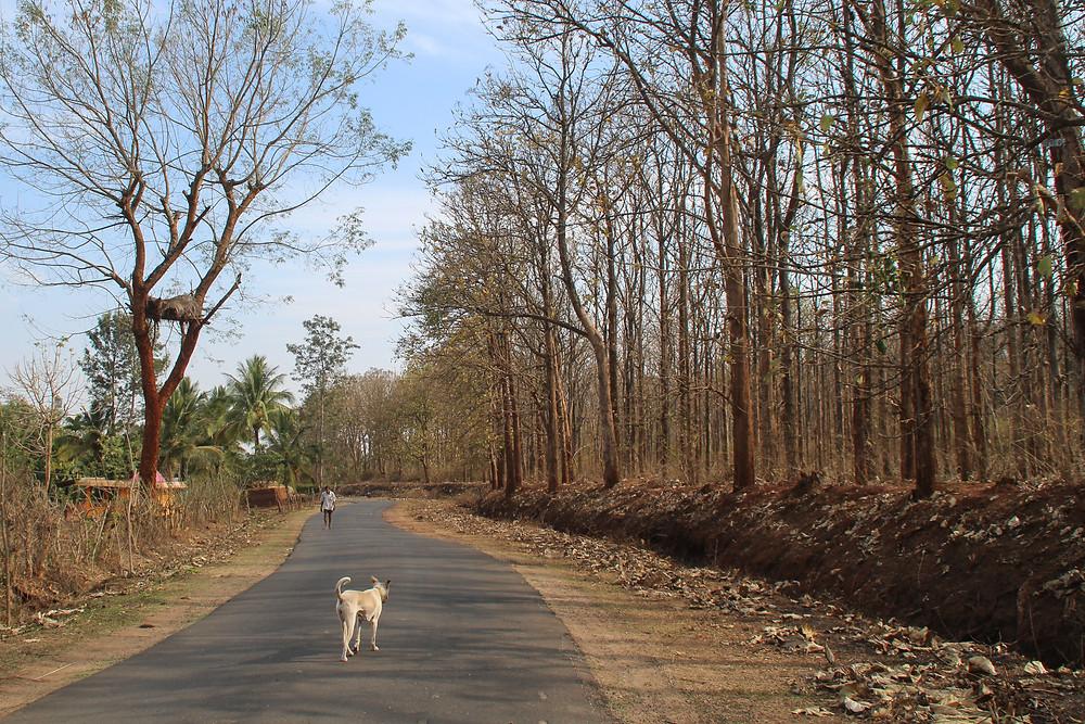 כלב הולך על הכביש שמחוץ לחווה