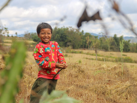 A girl playing in a wheat field, A woman working in a wheat field, on the way from Kalaw to Inle Lake