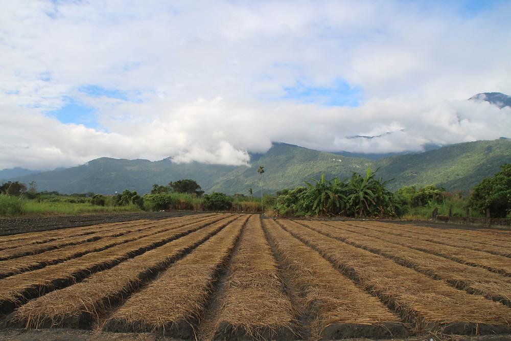 נוף חקלאי בטייוואן