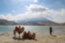 Camels in Karakol lake, China