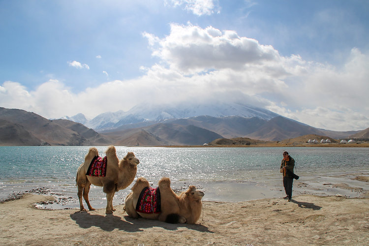 Camels in Karakol lake, China