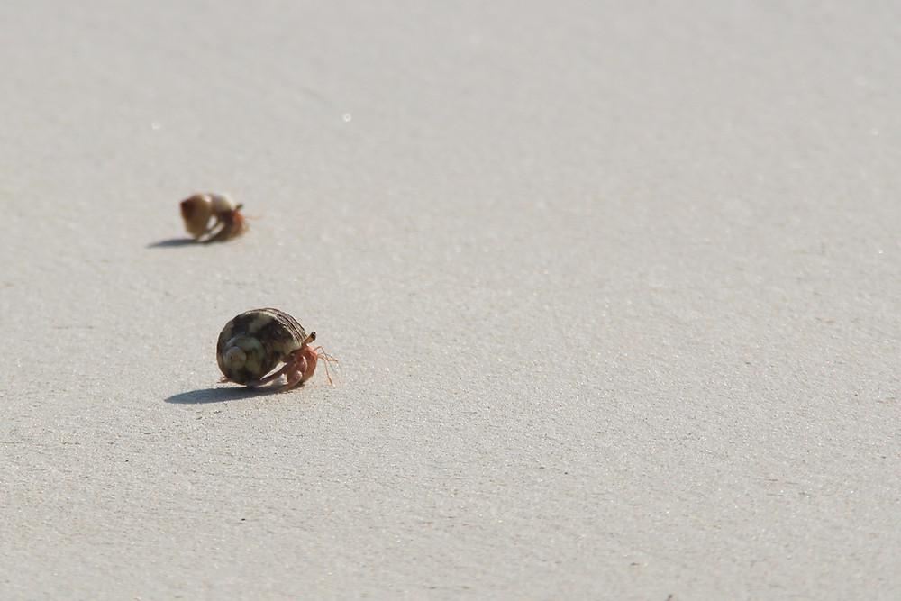 סרטנים קטנים על החוף באנדמן