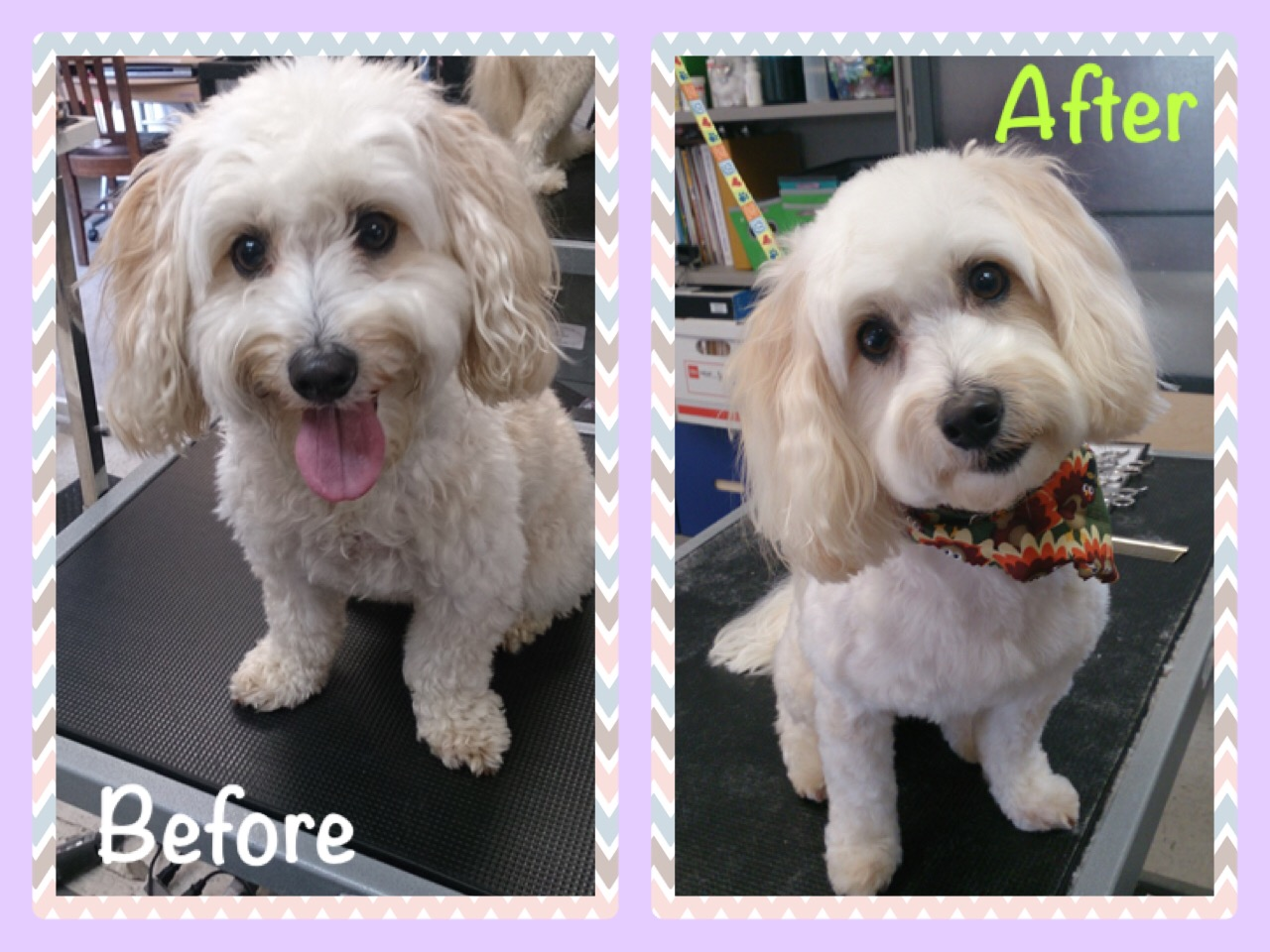 Fluff & Puff Before & After