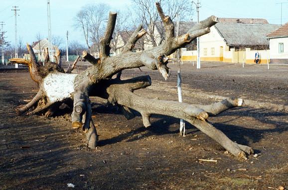 Die entwurzelten Bäume