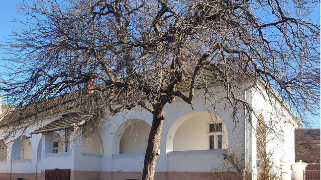 Der alte Birnbaum im Hof