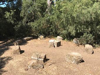 Golden Gate Park Druid Cirles