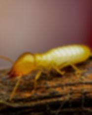 building & pest Inspection Kingscliff