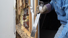 Termites and what to look out for