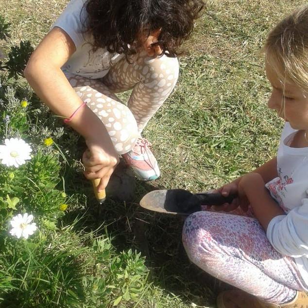 sembrando nuevas plantas