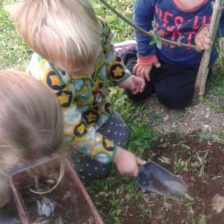 recolectando plantas de la huerta
