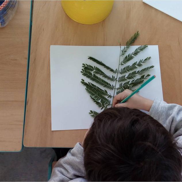 Dibujando las formas de la naturaleza