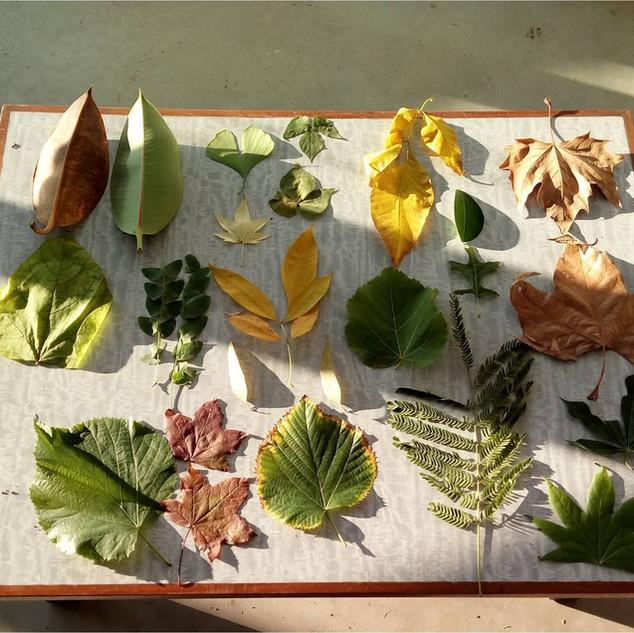 Armando un herbario