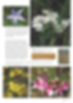 Granite Belt Flora Review_Page_2.jpg
