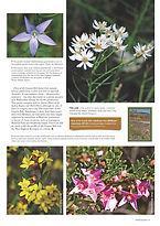 Granite Belt Flora Review_Page_2.jpg