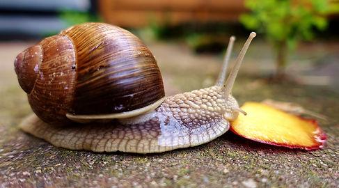 escargot.jpg