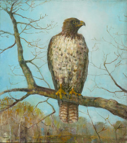 Red-tailed Hawk (1800px)