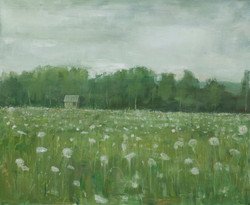 Field in Maine