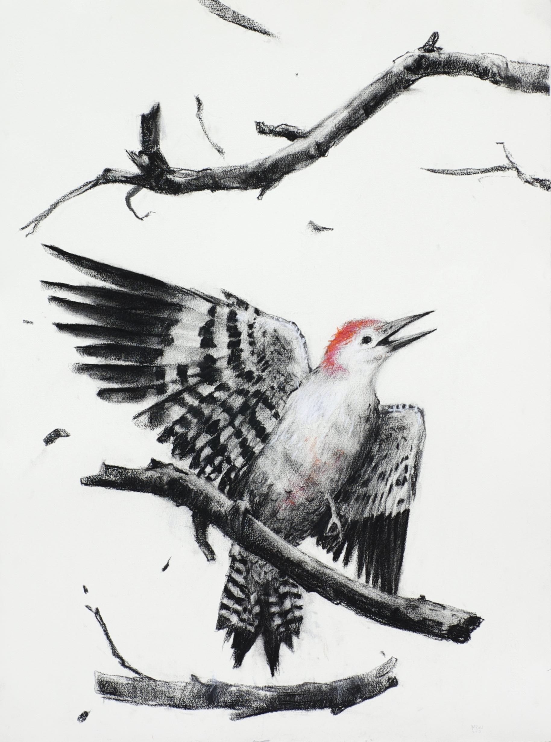 Falling woodpecker
