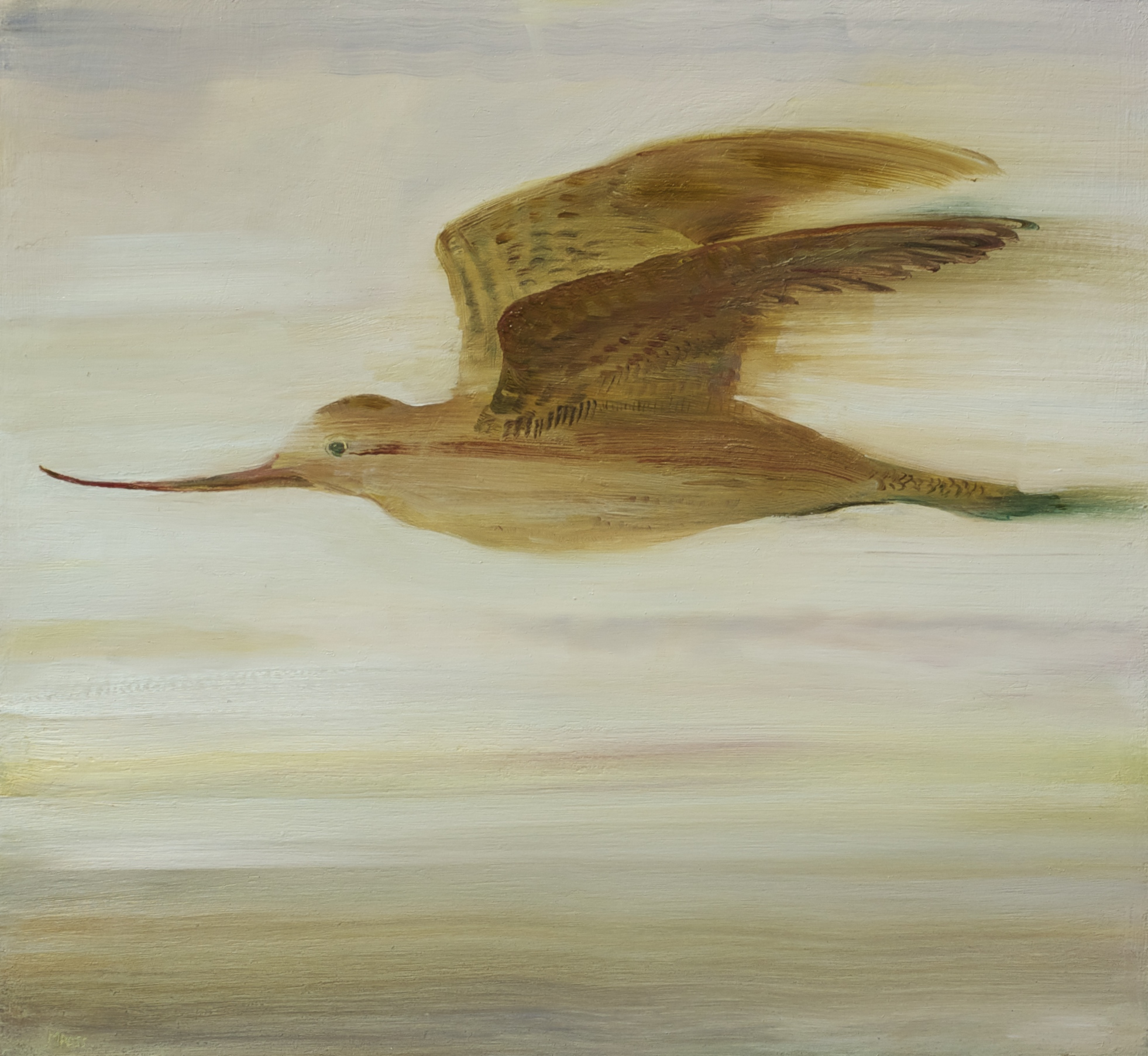 Flying Godwit
