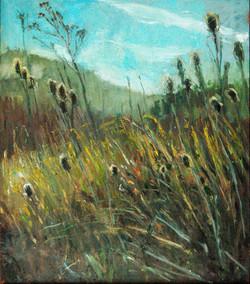 Field in Sunlight, Point Reyes