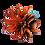 Thumbnail: Bromélia