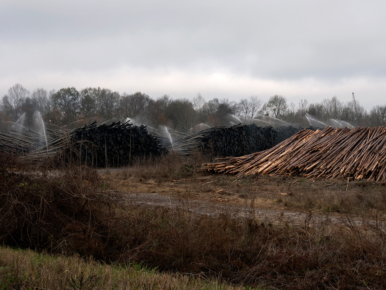 Log Yard, Georgia Pacific Paper Company