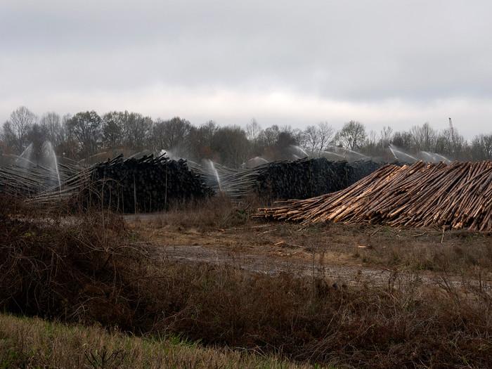 Log Yard, Georgia Pacific Paper Company